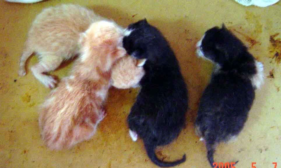 有人要养刚出生的小猫吗 台中图片