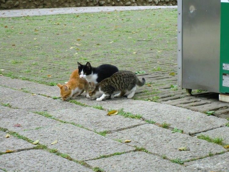 小猫猫~~
