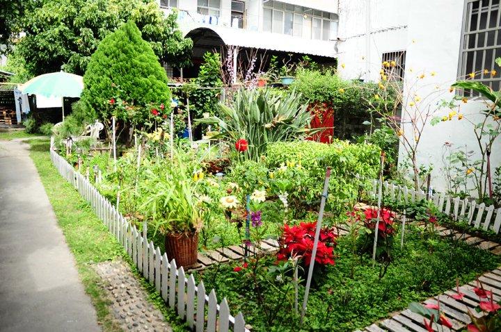 【閒妻新春台東遊記】- 第三天 - 關山、池上的那些花兒