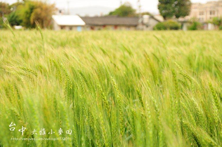 【閒妻悠遊台中】- 大雅小麥文化季~看見小麥在跳舞