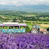 北海道蜜月首選-利百加旅遊